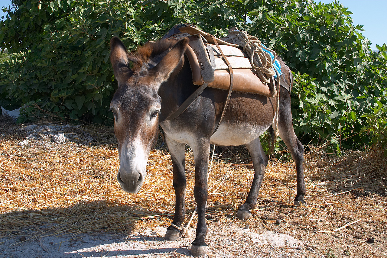 Www velika crna magarac maca com